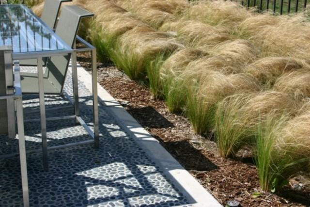 plantas de exterior hierba pluma mejicana