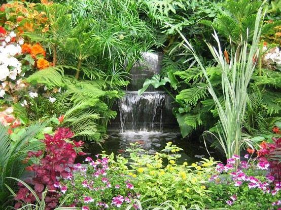 planta exotica jardin naturales jardineria decoracion