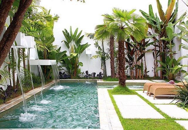 pequeño piscina palmera lugar descanso cascadas