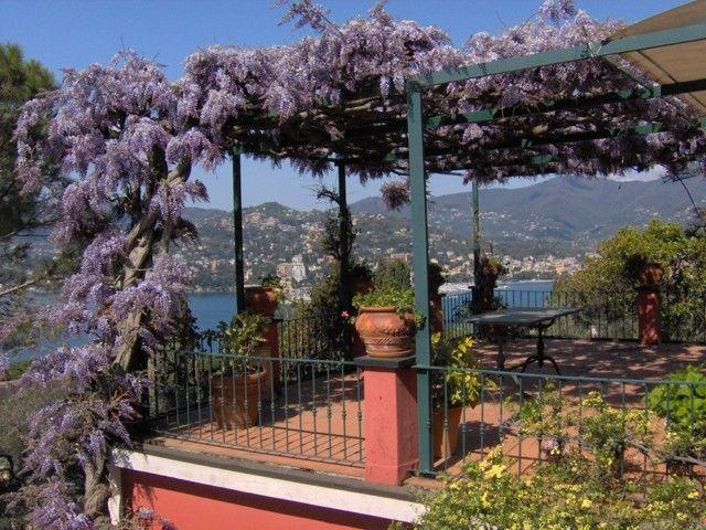 pergola plantas preciosas color aroma purpora