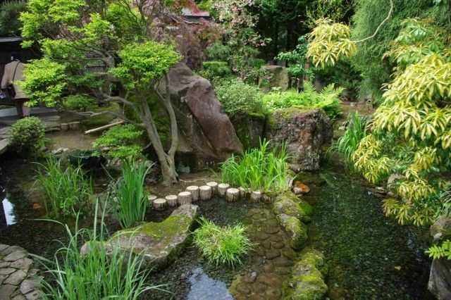 plantas agua rocas bambu lago
