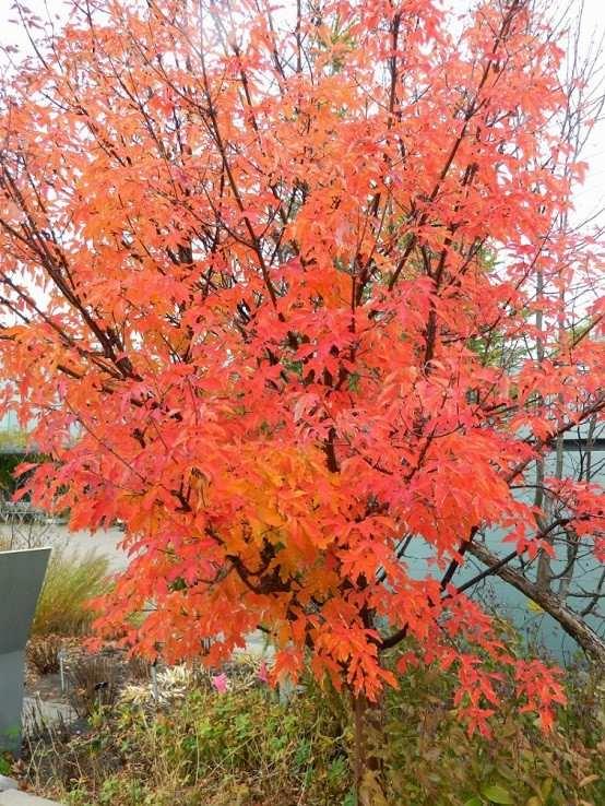 plantas color cuidados jardineria ramas