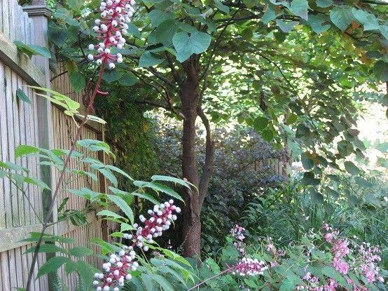 plantas color flores cercado jardin