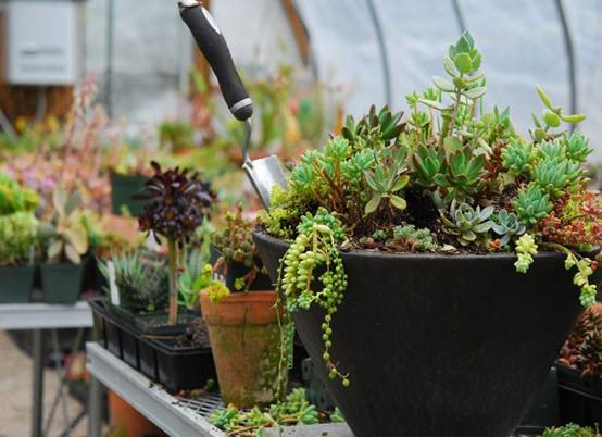 Outdoor plants ideas for a dream garden home dezign - Plantas colgantes de exterior ...
