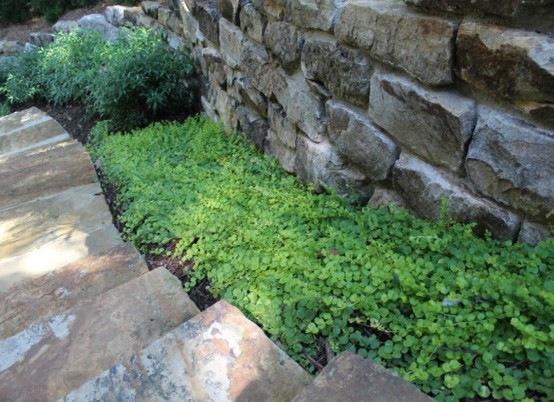 plantas de exterior ornamentales interior escalera