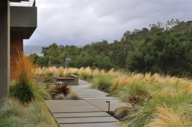 plantas de exterior resistentes secano pluma mejicana