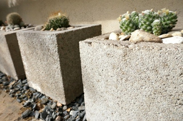 plantas exterior cactus resistente sol maceta