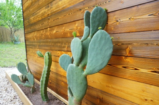 Plantas de exterior resistentes las m s f ciles de cuidar - Plantas de balcon resistentes al sol ...