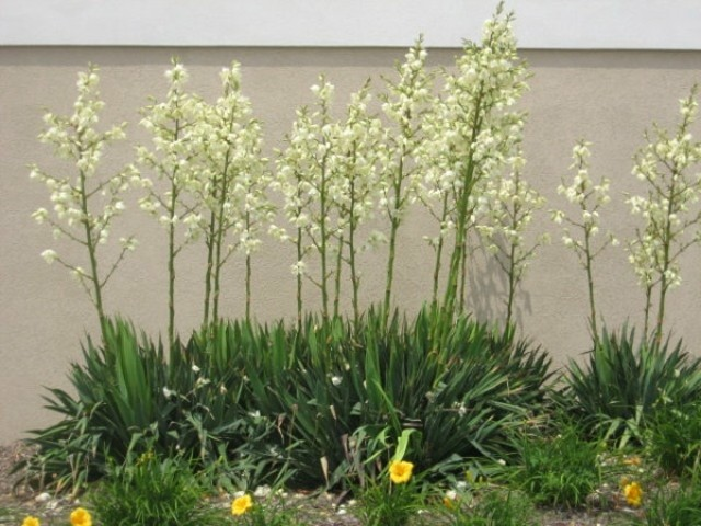 Plantas de exterior resistentes las m s f ciles de cuidar - Plantas exteriores todo el ano ...