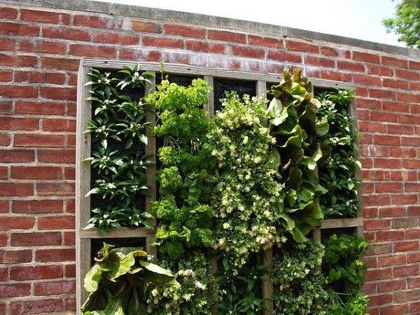 plantas interior colgante exterior ladrillos pared