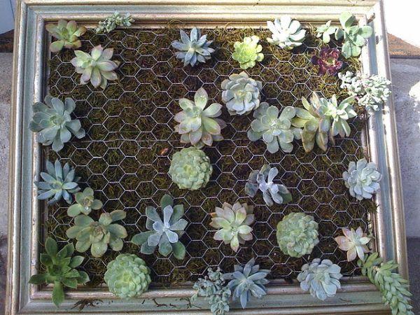 plantas interior colgante malla suculentas diseño