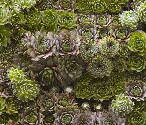 plantas interior tupido suculentas jardin