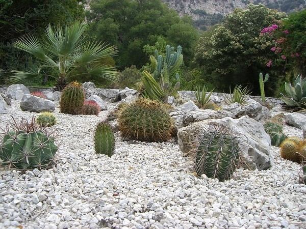 plantas varias cactus secano