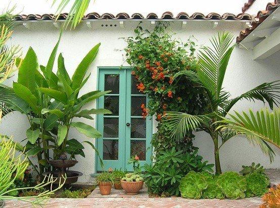 plantas medicinales tropicales flores jardin