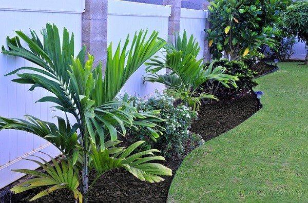 plantas palmeras cesped flores mantillo diseño