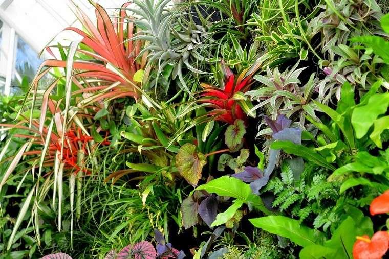 plantas varias paisaje jardinería colores