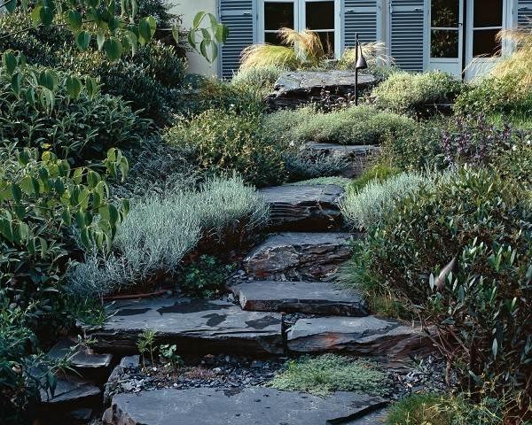 rocas suculentas jardín plantas suculentas