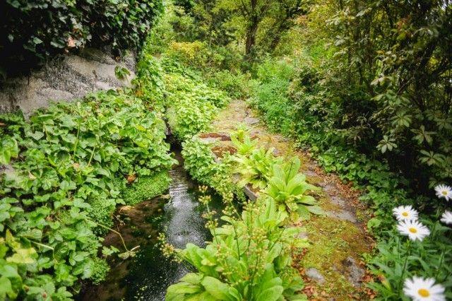 senda natural piedras bosque río