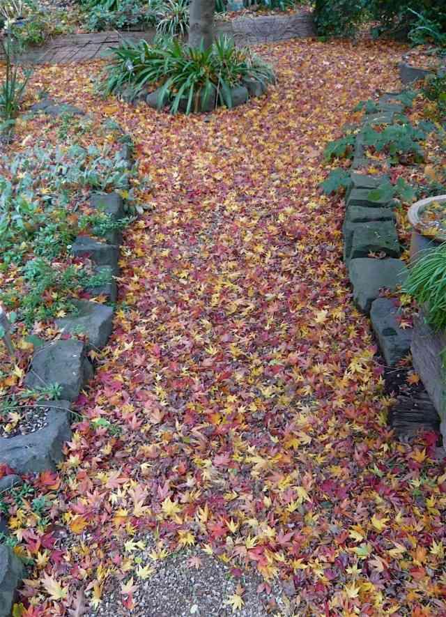 sendero camino natural otoño hojas