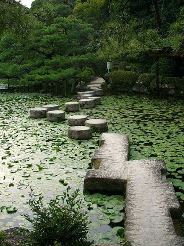 sendero piedras estanque lago pantano