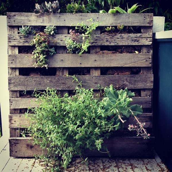 suculentas palet vertical jardin muro