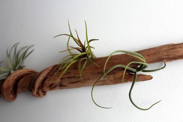tronco madera planta viva natural