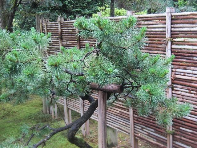 vallas de madera cesped bambu plantas