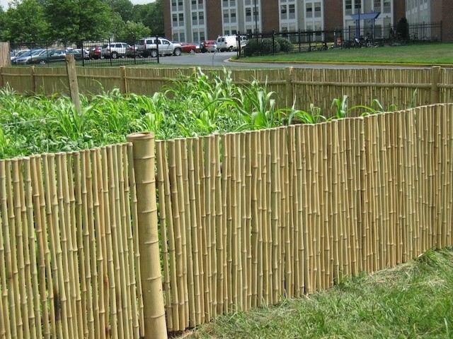 vaya bambu cercado plantas jardin