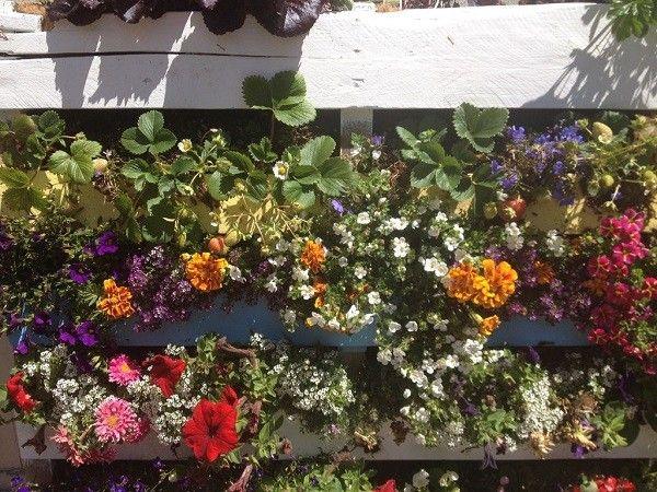 vertical flores madera palet plantas verticales