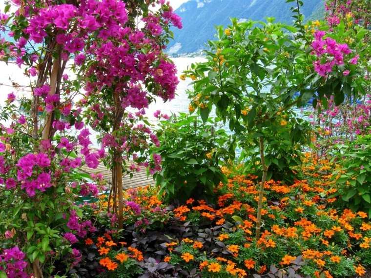 amarillo rosa plantas contraste plantas