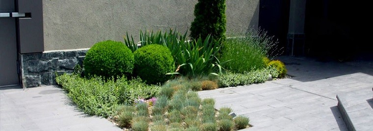 paisajismo plantas exterior arquitectura