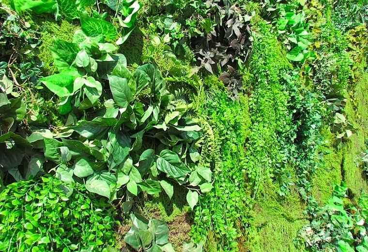 bonitas plantas jardines verticales verdes