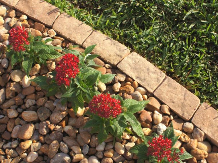 bordes plantas rojas jardín flores