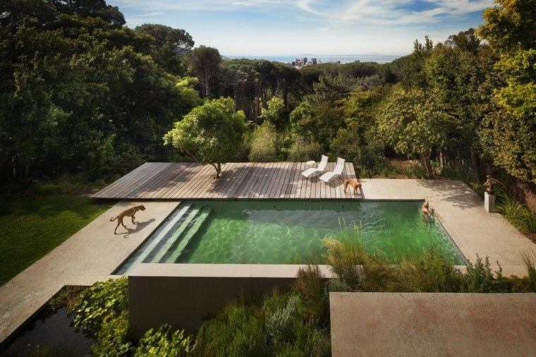 bosque piscina plataforma madera perro