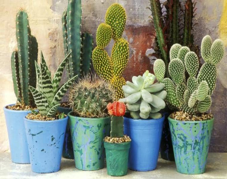 cactus macetas