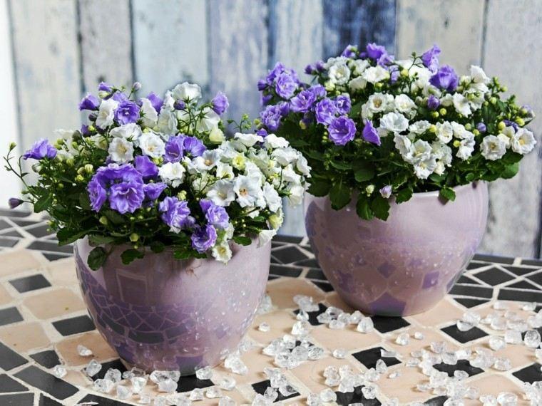 contraste blanco malva macetas flores