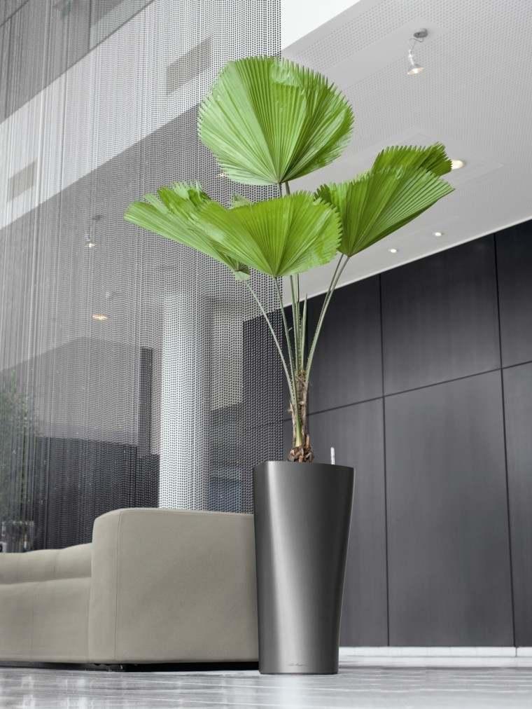 decoración con maceteros alto elegante planta