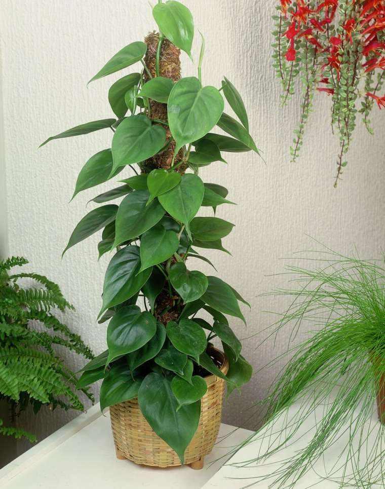 decoración de interiores con plantas enredadera maceta