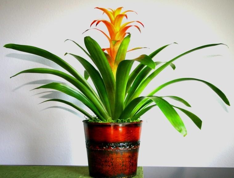 decoración de interiores con plantas flor interior maceta