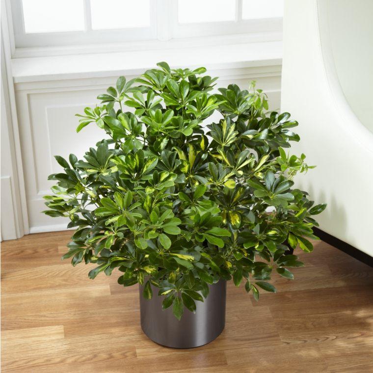 Decoraci n de interiores con plantas reg late bienestar - Decoracion de plantas ...