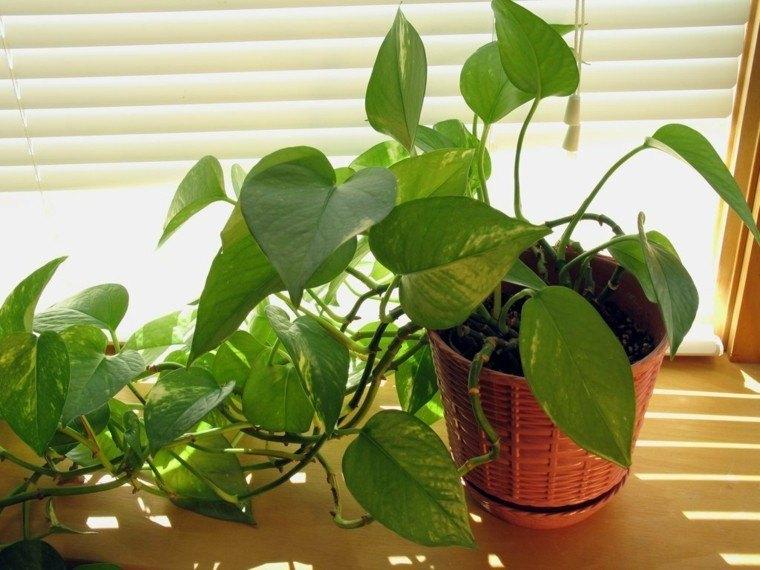 decoración de interiores con plantas ventana cortina luz