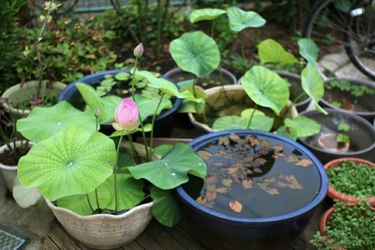 Decoracion de jardines con las flores de primavera for Decoracion de macetas para plantas