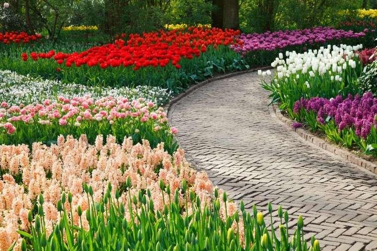 distintas flores camino primavera ideas jardin ideas