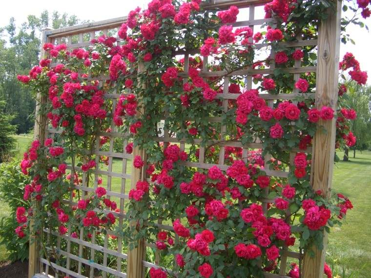 estilo jardin bonito rosal ideas madera rosas rojas