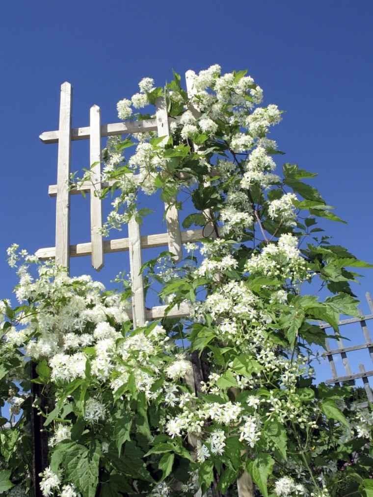 estilo jardin rejas blancas ideas bonitas plantas