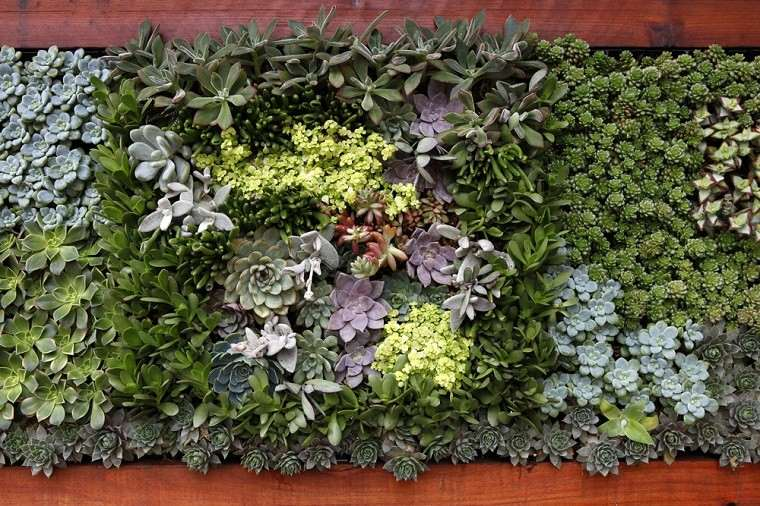estupendo muro pared jardin vertical