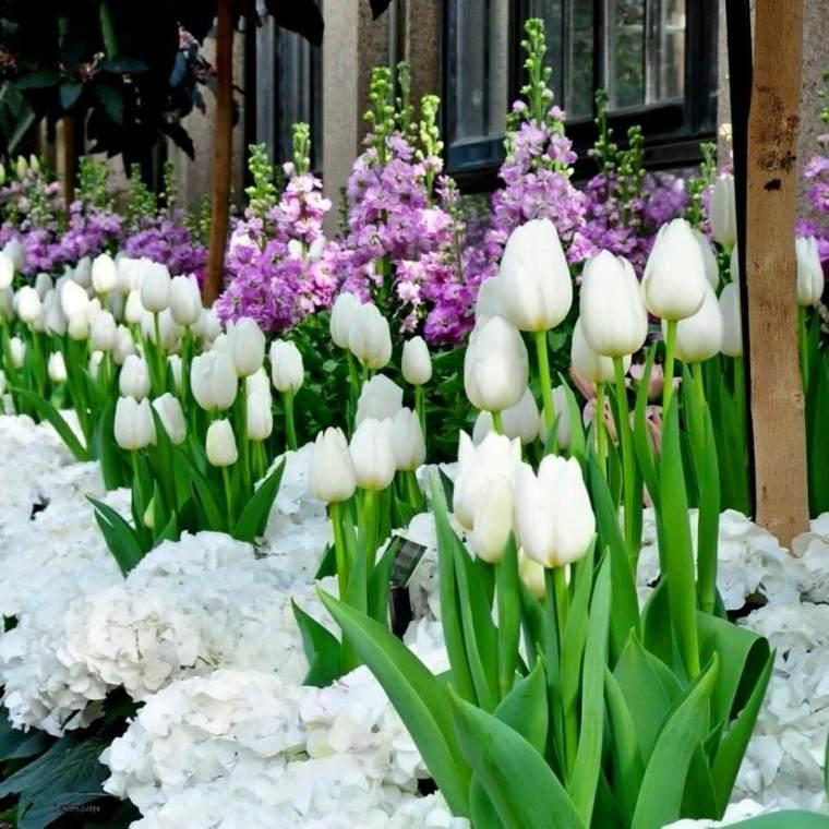 flores blancas ideas elegantes jardin bonito moderno