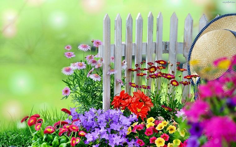 flores bonitas jardin bajas altas colores valla blanca ideas