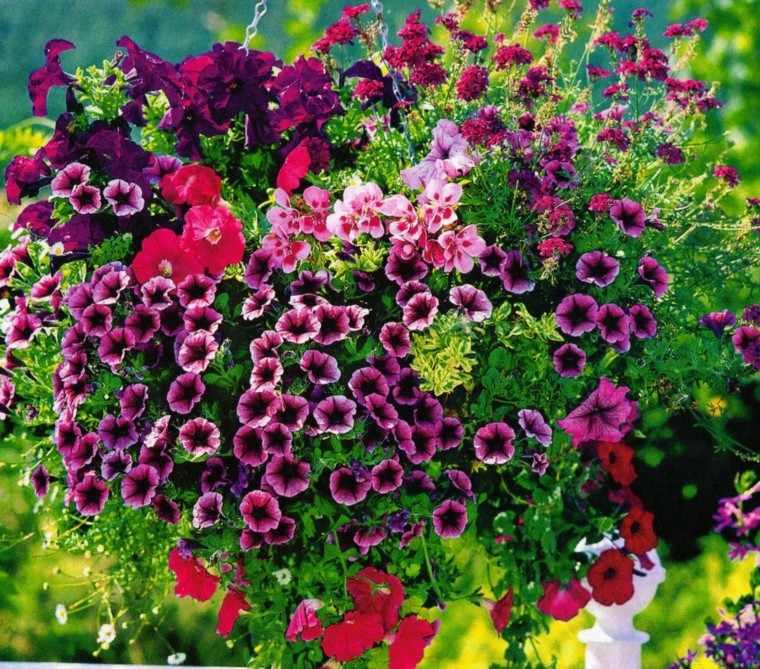 flores bonitas macetas colgantes jardin ideas