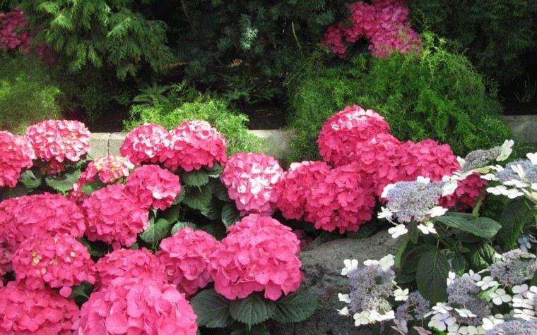 flores bonitas rosa jardin ideas interesantes primavera ideas